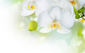 white, photoshop, spring, background