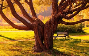 greenery, tree, park, grass, Sun