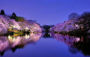 sakura, evening, flowers, sky, lake