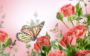 roses, flowers, butterfly