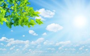 sunlight, nature