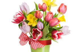 spring, tulips, bouquet, white background