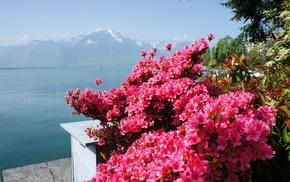 flowers, lake, mountain, spring, Alps