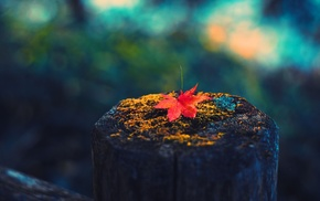 природа, листья, макро, глубина резкости