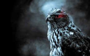 selective coloring, birds, eagle