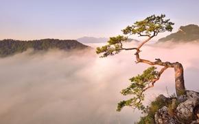 красивые, небо, лес, дерево, туман, горы