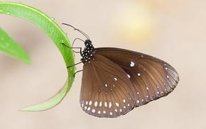 leaf, macro, dew, wings, beautiful