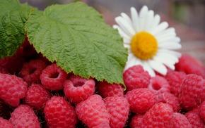 листья, вкусно, малина, ромашка, цветок, ягоды