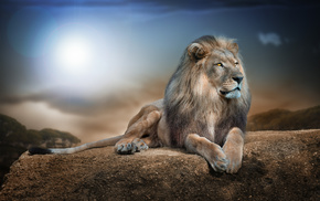 Sun, photoshop, 3D, lion, predator