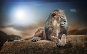 Sun, photoshop, 3D, lion, predator