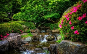 flowers, river, forest, nature, park