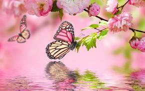 flowers, spring, sakura, photoshop, twigs