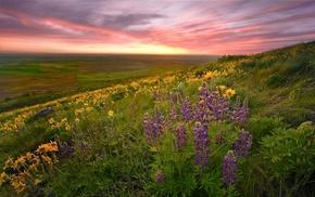 sunset, glade, stunner