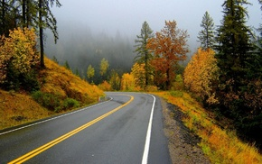 road, mist, trees, autumn, nature