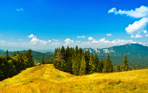 forest, glade, stunner, mountain, sky
