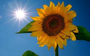 stunner, flower, sky, Sun
