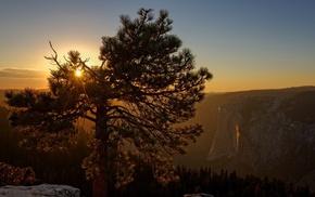 USA, forest, sunset, nature, Sun