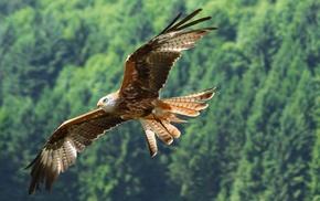 орел, животные, полет, птица, хищник, природа
