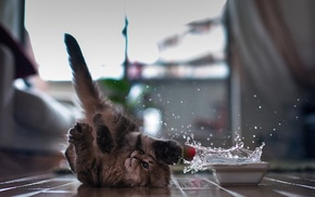 kid, drops, water, animals, kitten