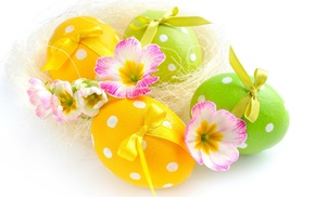 flowers, white background