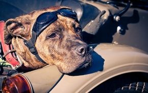 motorcycle, glasses, dog, eyes, muzzle