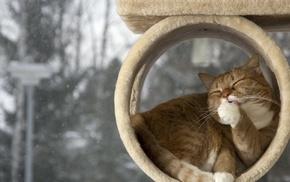 красиво, морда, кот, удовольствие, весело, лапы