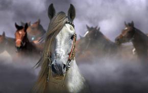 лошадь, животные, размытие, фон