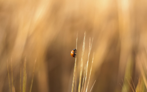 ladybugs, blurred, climbing, insect