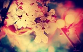 белые цветы, глубина резкости, фильтр, цветы