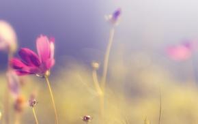 purple flowers, blurred, nature, flowers