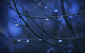 depth of field, twigs, water drops, nature