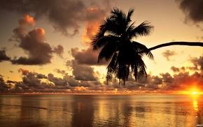 palm, nature, ocean, sky