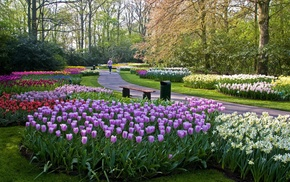 tulips, nature, landscape