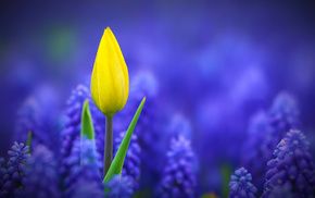 flowers, macro, photo