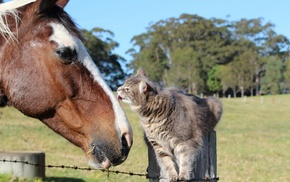 animals, positive, horse